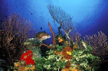 Underwater Dive Photography
