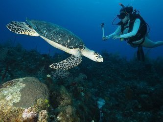 Underwater Dive Photograph of a Turtle